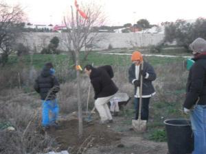 Verpopa nouveau arbre sorbier